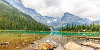Sjönolla Hara Arkivbild
