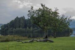 Sjöområdesträd Royaltyfria Bilder