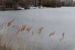 Sjösegelbåtväxter royaltyfri bild