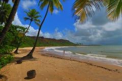 Sjösida med en sandig strand och Palmas från Coquerinho av tillståndet av Paraiba Brasilien Arkivbilder