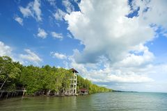 Sjösidamangroveskog i det Trad landskapet, Thailand royaltyfria foton
