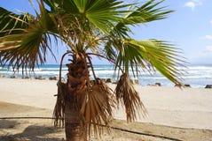 Sjösidasikt till och med palmtreen arkivbild