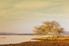 Sjösidosolnedgång med fördunklade himmel och träd royaltyfri bild