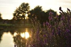Sjösolnedgång med växter och en blury bakgrund arkivfoton