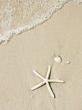 sjöstjärna Royaltyfri Foto