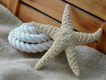 Sjöstjärna Royaltyfri Fotografi