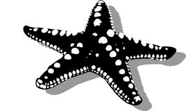 sjöstjärna Arkivbild