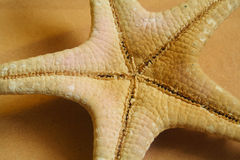 sjöstjärna arkivbilder