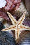 sjöstjärna för 2 skal Royaltyfria Foton