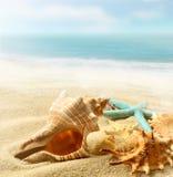 sjöstjärna för strandhavsskal Arkivbild