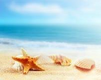 sjöstjärna för strandhavsskal Royaltyfri Bild