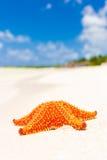 Sjöstjärna (havsstjärna) på en tropisk strand i Kuba Arkivfoto
