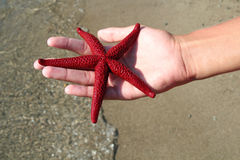 Sjöstjärna i hand Royaltyfri Fotografi