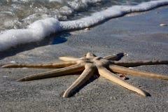 Sjöstjärna med havet som sättas på land på den Sanibel ön Arkivfoto