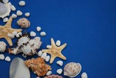 Sjöstjärna med skal och stenar mot en blå bakgrund med kopieringsutrymme holliday sommar Nautiskt Marrine begrepp royaltyfria foton