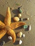 Sjöstjärna och kiselstenar Royaltyfri Foto