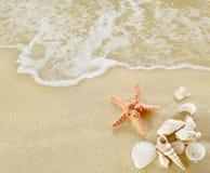 Sjöstjärna och skal på den sandiga stranden royaltyfri fotografi