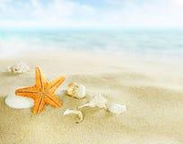 Sjöstjärna och skal på den sandiga stranden fotografering för bildbyråer