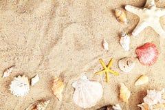 Sjöstjärna och skal på sandstranden Fotografering för Bildbyråer