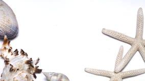 Sjöstjärna och skal på vit bakgrund Arkivfoton