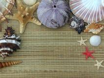 Sjöstjärna och snäckskal Royaltyfria Bilder