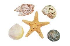 Sjöstjärna och snäckskalcloseup Royaltyfri Foto