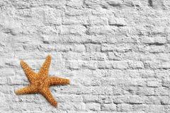 Sjöstjärna- och tegelstenvägg Arkivfoton