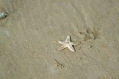 Sjöstjärna på den sandiga kusten för hav Arkivbild