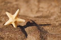 Sjöstjärna på den svarta sandstranden Royaltyfri Fotografi