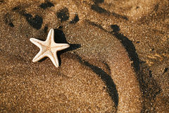 Sjöstjärna på den svarta sandstranden Arkivbilder