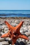 Sjöstjärna på en stenstrand Fotografering för Bildbyråer