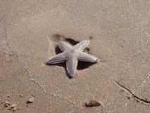 Sjöstjärna på en strand Arkivbild