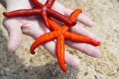 Sjöstjärna på en strand Arkivfoto