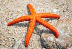 Sjöstjärna på en strand Arkivfoton