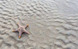 Sjöstjärna på en strand som vågor Roy Royaltyfria Foton