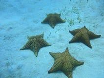 Sjöstjärna på havsbottnen arkivfoto