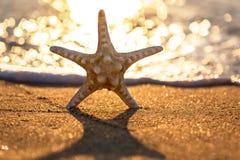 Sjöstjärna på havsstranden Arkivfoton