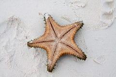Sjöstjärna på klart vatten Royaltyfria Foton