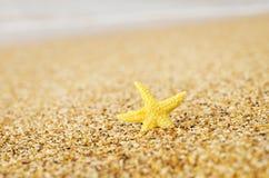 Sjöstjärna på sanden Arkivbild