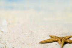 Sjöstjärna på sandig strand Royaltyfri Bild
