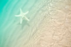 Sjöstjärna på sommarstranden med sand royaltyfri fotografi