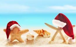 Sjöstjärna på sommarstranden och jultomtenhatten royaltyfria bilder
