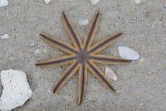 Sjöstjärna på strand Fotografering för Bildbyråer