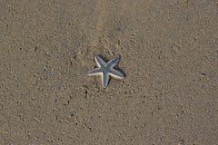 Sjöstjärna på strand royaltyfri bild