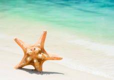 Sjöstjärna på stranden Fotografering för Bildbyråer
