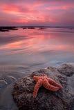 Sjöstjärna på stranden Royaltyfria Foton