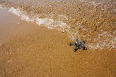Sjöstjärna på stranden, i havet Arkivfoton