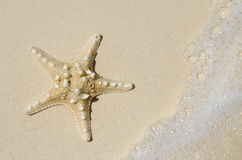 Sjöstjärna på stranden med tidvatten som in kommer Arkivfoto