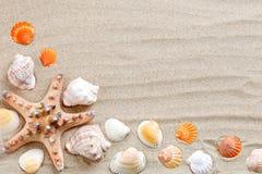 Sjöstjärna, snäckskal, havsstenar och palmblad som ligger på havssanden Det finns ett ställe för etiketter Arkivbild