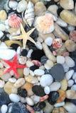 Sjöstjärna, snäckskal och färgrika kiselstenstenar Royaltyfri Foto